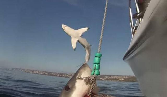 shark-photo-bomb-640